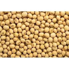Raw Soybean for horses
