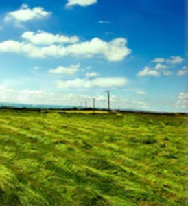 grass hay field
