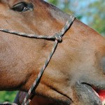 Healthy Treats For Horses Equestrian Barns Architecture Start Living The Dream Equine Facility Design