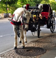 NYC Carriage horse