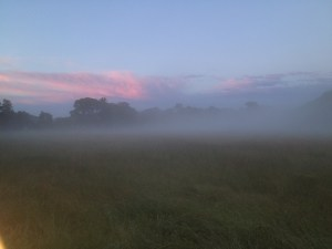 The fog rolled in over the field just as the sun was setting.