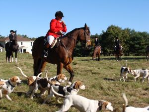 Hunting on Strawberry Hill in Acton