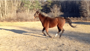 Sheldon enjoying the larger pasture