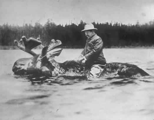 President Roosevelt on Moose