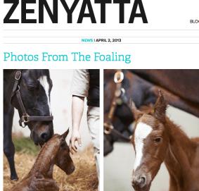 zenyatta.com