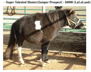Super talented Hunter-Jumper
