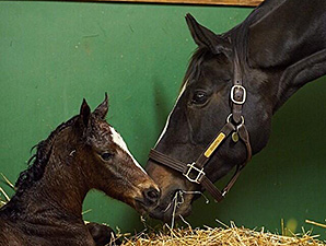 Zenyatta's filly by War Front was born a few minutes after midnight.