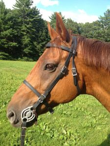 Freedom in his Biothane Bridle