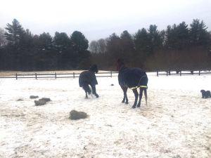 Zelda and hay