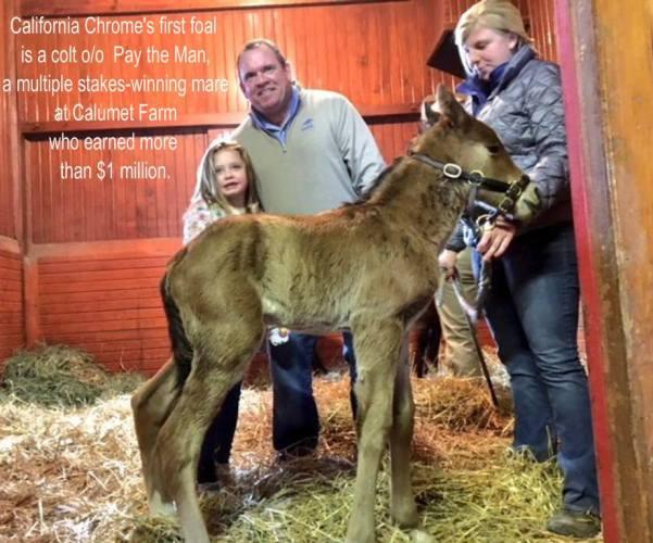 California Chrome's First Foal