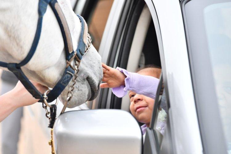 Arley meets a horse