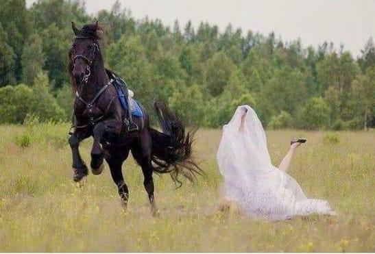 Horse weddings