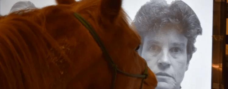Study shows horses recognize photos of caregivers