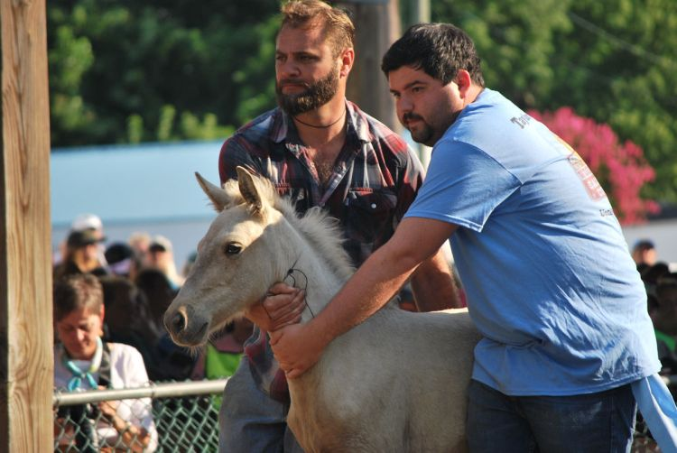 Chincoteague Pony Auction goes online