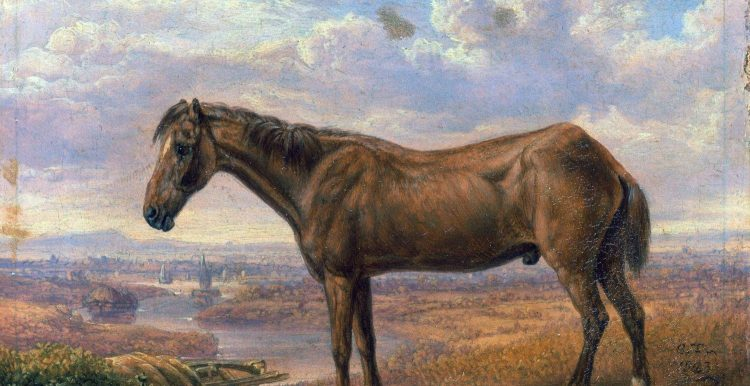 Old Billy, the World's Oldest Horse