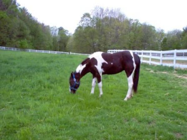 Dream Spirit Farm On EquineNow