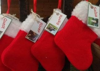 stockings_closeup_web