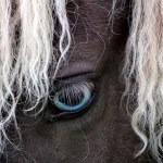 Celtic Blue Eye The Equine Tapestry