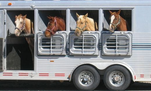 What is the best way to travel your horse