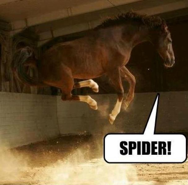 hacking alone horse spooking
