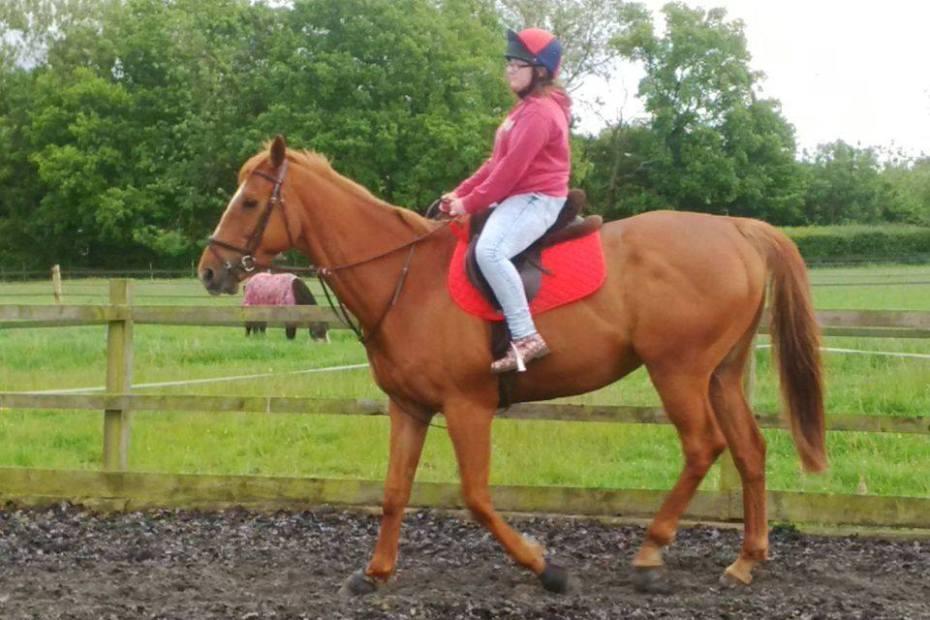 scarlet riding scottie