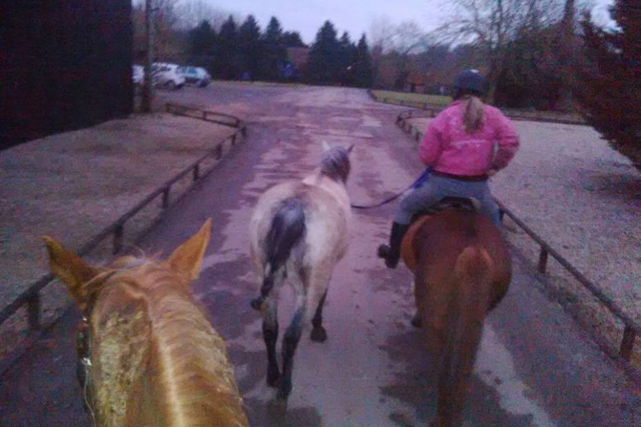 hacking out with eva and the ponies