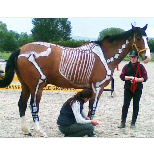 skeleton painting on horse
