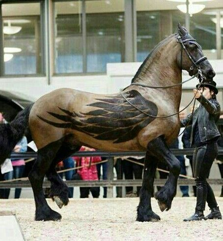 horse with clipped wings