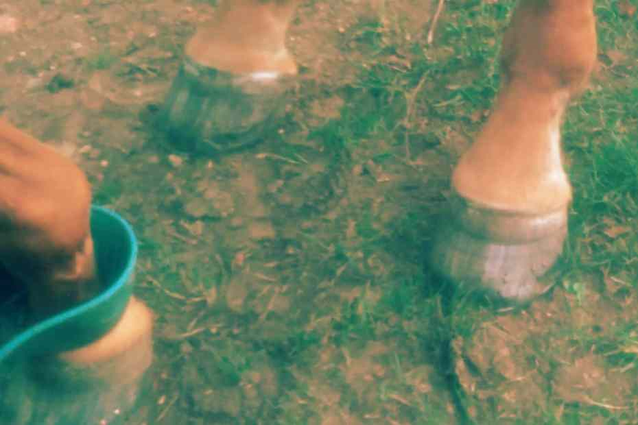 scotties feet