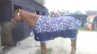 Shires shopping turn out rug