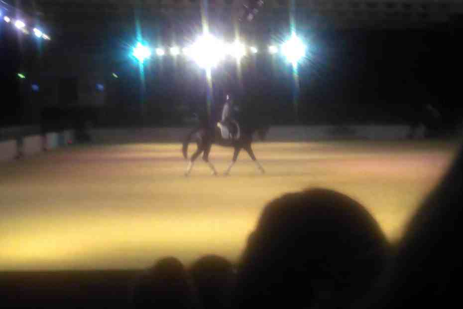 Own Photo from your horse live En Vogue
