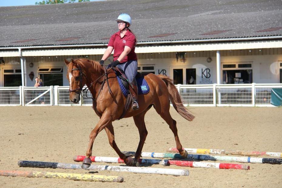Scottie going over the poles, example of chestnut coat genetics., ex racehorses