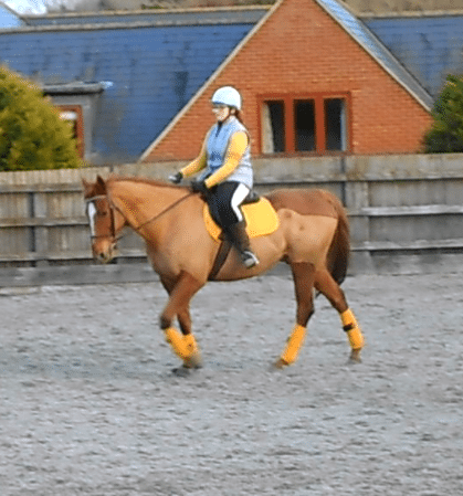schooling scottie in matchy matchy mustard