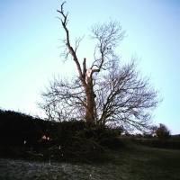 fallen tree in scotties field