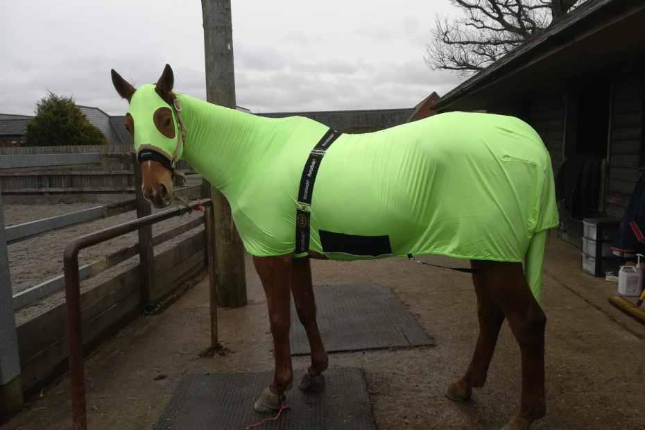 Scottie modelling his horse hoods body suit
