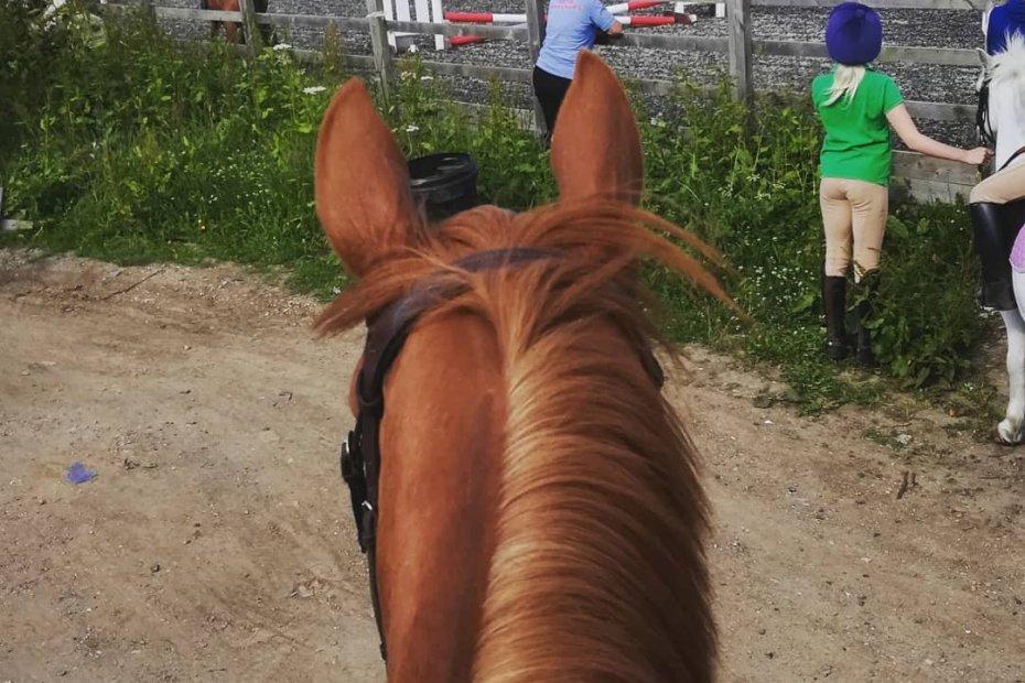Through scottie's chestnut ears