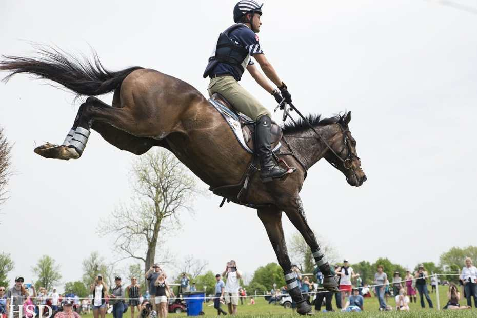 a horse jumping at the thoroughbred makeover project