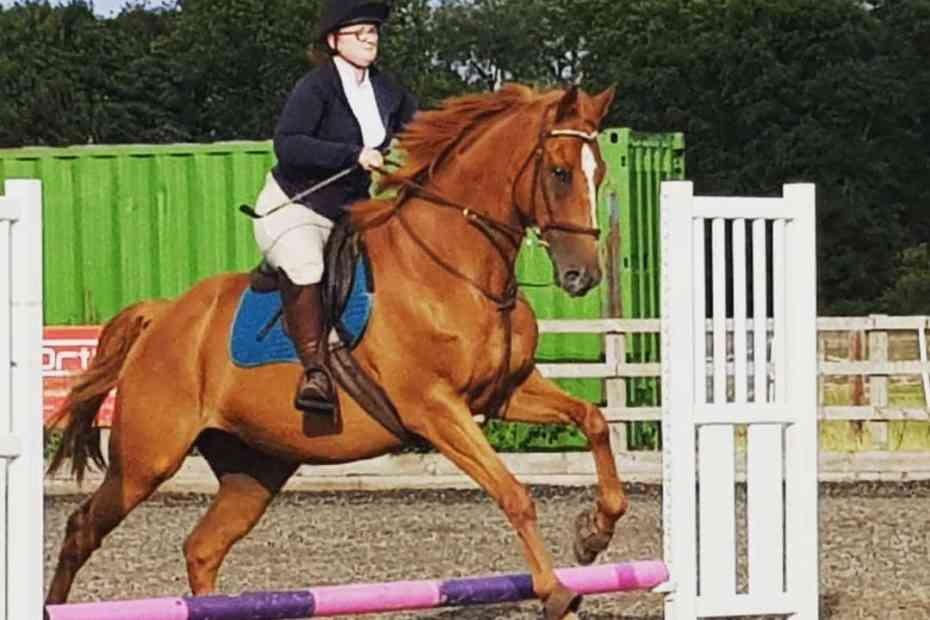 showjumping scottie no refusals here and setting goals for the future