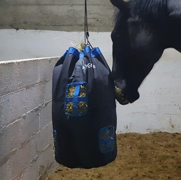 horse using haygrazer play