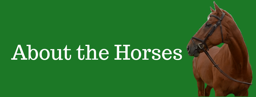 About the horses