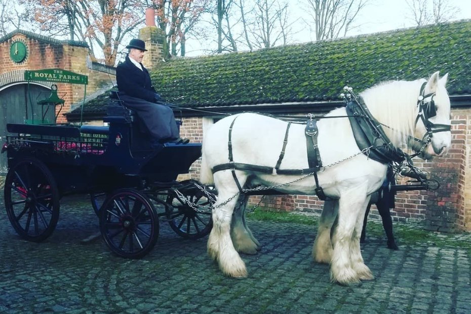 opperation centuar, carriage horse, history of horses