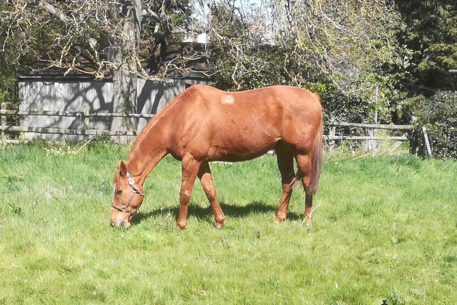 scottie grazing turnout, when to worm your horse