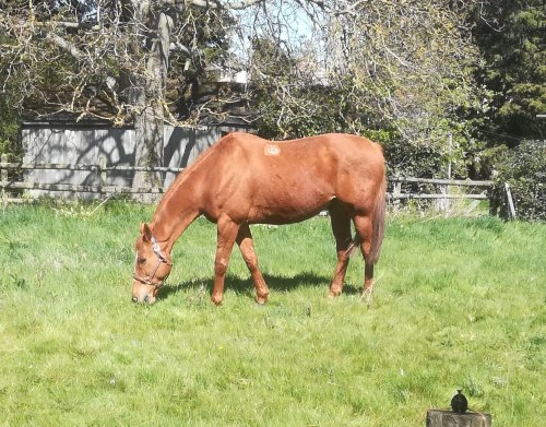 scottie grazing, when to worm your horse