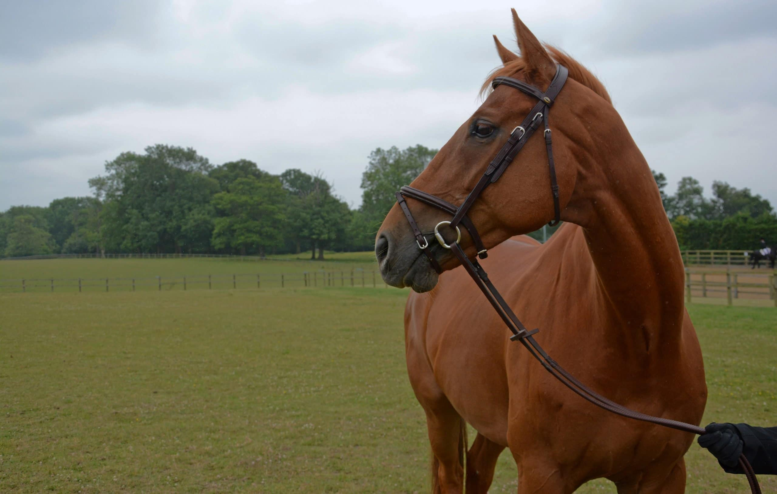 Does Bridle Fit Affect Performance?
