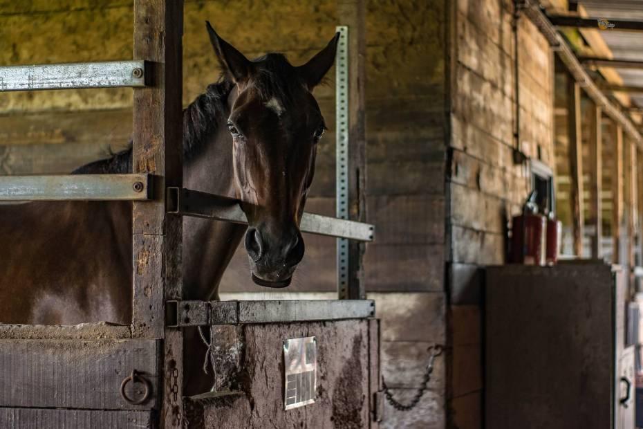 animal barn building cavalry