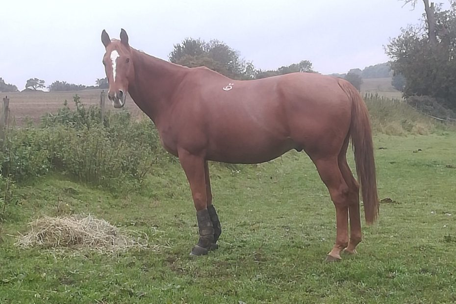 turnout is good for older horses