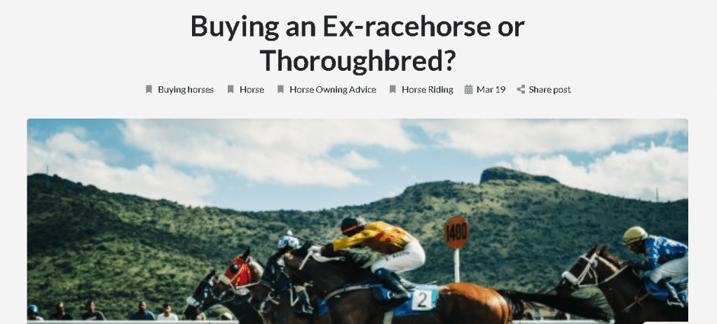 horse search ex racehorse article