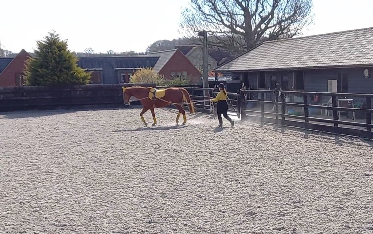 How to introduce trot when long reining