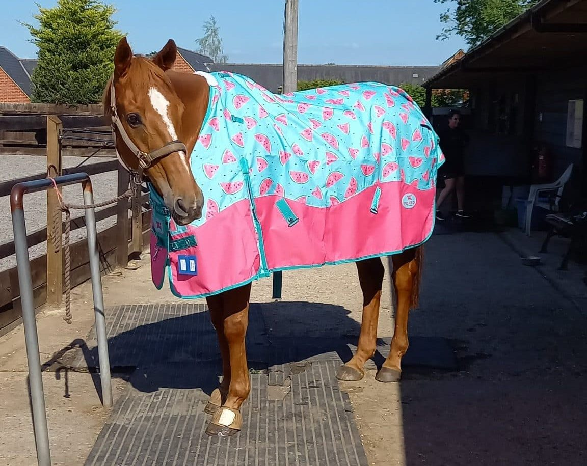 Ponyo Turnout Rug Review ~ 0g Watermelon