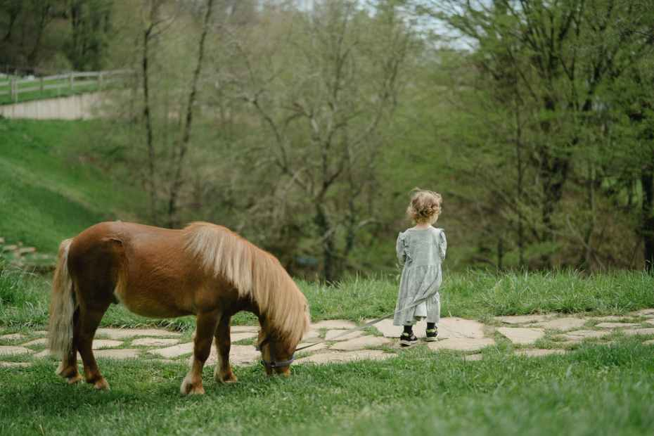 girl in white dress standing beside brown horse, buying a pony for your child